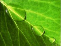 ύδωρ φύσης στοκ εικόνα