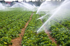 ύδωρ ψεκασμού γεωργίας Στοκ Εικόνα