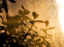 ύδωρ ψεκασμού φυτών Στοκ Εικόνες