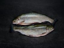 Δύο ακατέργαστα ψάρια πεστροφών στο σκοτεινό υπόβαθρο Στοκ εικόνα με δικαίωμα ελεύθερης χρήσης