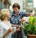 Δύο γυναίκες πίνουν το τσάι στο μπαλκόνι Στοκ Εικόνες