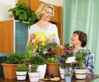 Δύο ηλικιωμένες γυναίκες με flowerpots Στοκ φωτογραφίες με δικαίωμα ελεύθερης χρήσης