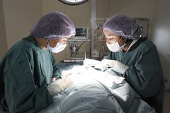 Δύο κτηνιατρικοί χειρούργοι στο λειτουργούν δωμάτιο Στοκ Φωτογραφίες