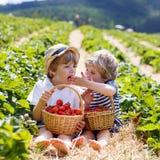 Δύο μικρά αγόρια αμφιθαλών στο αγρόκτημα φραουλών το καλοκαίρι Στοκ εικόνες με δικαίωμα ελεύθερης χρήσης