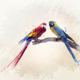 Δύο παπαγάλοι Watercolor Στοκ εικόνα με δικαίωμα ελεύθερης χρήσης