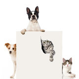 Δύο σκυλιά και δύο γάτες Στοκ φωτογραφίες με δικαίωμα ελεύθερης χρήσης