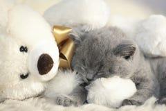 ύπνοι γατών στοκ φωτογραφίες