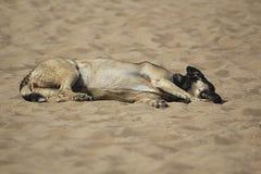 Ύπνοι ενήλικοι σκυλιών στην άμμο κάτω από τον ήλιο Στοκ φωτογραφίες με δικαίωμα ελεύθερης χρήσης