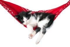 Ύπνοι λίγων γατακιών σε μια αιώρα Στοκ εικόνες με δικαίωμα ελεύθερης χρήσης
