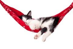 Ύπνοι λίγων γραπτοί γατακιών σε μια κόκκινη αιώρα γάτα μικρή Στοκ εικόνες με δικαίωμα ελεύθερης χρήσης