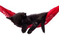 Ύπνοι λίγων μαύροι γατακιών σε μια κόκκινη αιώρα Στοκ εικόνες με δικαίωμα ελεύθερης χρήσης
