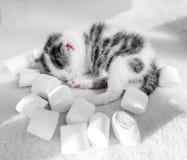 Ύπνοι χαριτωμένοι μικροί γατακιών σε ένα άσπρο marshmallow ταπήτων υπόβαθρο Χαριτωμένα γλυκά γατακιών ύπνου nbackground Στοκ φωτογραφίες με δικαίωμα ελεύθερης χρήσης