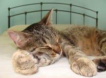 Ύπνος άνετα στοκ εικόνες με δικαίωμα ελεύθερης χρήσης