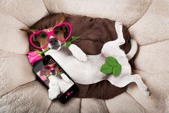Ύπνος ή στήριξη σκυλιών Στοκ φωτογραφία με δικαίωμα ελεύθερης χρήσης