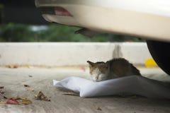 Ύπνος γατών κάτω από το αυτοκίνητο Στοκ Φωτογραφίες