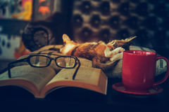 Ύπνος γατών με eyeglasses βιβλίων και το φλυτζάνι καφέ Στοκ φωτογραφία με δικαίωμα ελεύθερης χρήσης