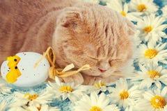 Ύπνος γατών στα λουλούδια με το αυγό Πάσχας Στοκ Εικόνες