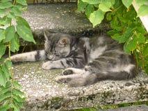 Ύπνος γατών στα σκαλοπάτια Στοκ Εικόνες