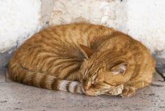 Ύπνος γατών στην οδό στοκ φωτογραφία