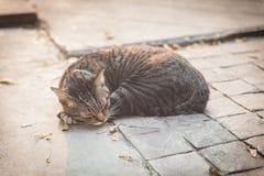 Ύπνος γατών στην οδό Στοκ Εικόνες