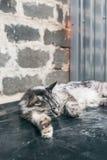 Ύπνος γατών στη βρώμικη επιφάνεια Στοκ εικόνα με δικαίωμα ελεύθερης χρήσης