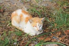 Ύπνος γατών στον κήπο Στοκ εικόνες με δικαίωμα ελεύθερης χρήσης