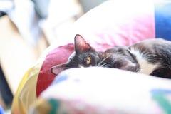 Ύπνος γατών στο μαξιλάρι Στοκ εικόνα με δικαίωμα ελεύθερης χρήσης
