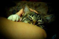 ύπνος γατών τιγρέ Στοκ Εικόνες