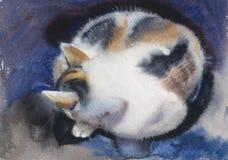 Ύπνος γατών Tricolor που κατσαρώνουν ελεύθερη απεικόνιση δικαιώματος