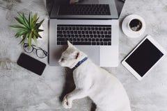 Ύπνος κατοικίδιων ζώων γατών στο γραφείο εργασίας στοκ φωτογραφίες με δικαίωμα ελεύθερης χρήσης