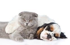 Ύπνος κουταβιών σπανιέλ κόκερ με το γατάκι Απομονωμένος στο λευκό Στοκ Εικόνα