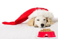 Ύπνος κουταβιών του Λαμπραντόρ Χριστουγέννων Στοκ Εικόνες
