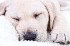 Ύπνος κουταβιών Στοκ φωτογραφία με δικαίωμα ελεύθερης χρήσης