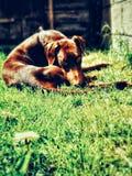Ύπνος κουταβιών Doberman στα λουτρά ήλιων στοκ φωτογραφία με δικαίωμα ελεύθερης χρήσης