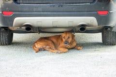 Ύπνος σκυλιών στην οδό, άστεγος ύπνος σκυλιών κάτω από το αυτοκίνητο Στοκ Φωτογραφία