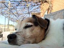 Ύπνος σκυλιών έξω κατά τη διάρκεια bbq Στοκ εικόνα με δικαίωμα ελεύθερης χρήσης
