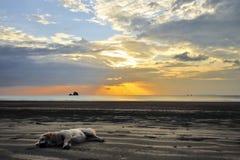Ύπνος σκυλιών θαλασσίως στο ηλιοβασίλεμα Στοκ Φωτογραφίες