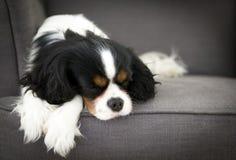 ύπνος σκυλιών Στοκ Εικόνα