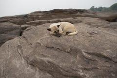 ύπνος σκυλιών Στοκ φωτογραφία με δικαίωμα ελεύθερης χρήσης