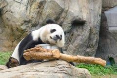 Ύπνος Panda στοκ φωτογραφίες με δικαίωμα ελεύθερης χρήσης