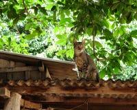 Ύποπτη γάτα Στοκ Φωτογραφίες
