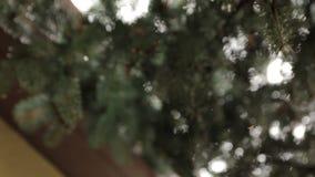 Ύφανση αραχνών ο Ιστός απόθεμα βίντεο