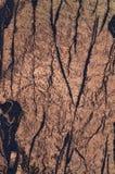 Ύφασμα μπροκάρ Στοκ φωτογραφία με δικαίωμα ελεύθερης χρήσης