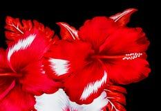 Ύφασμα τυπωμένων υλών λουλουδιών Στοκ Εικόνα