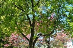 Ύφος Monet στοκ εικόνα με δικαίωμα ελεύθερης χρήσης