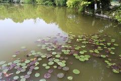 ύδωρ λιμνών κρίνων στοκ εικόνες