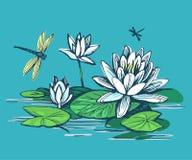 ύδωρ κρίνων λουλουδιών ελεύθερη απεικόνιση δικαιώματος