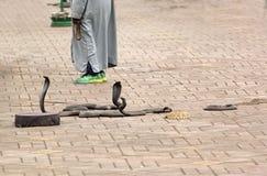 Ώρα για σόου για Cobras στοκ φωτογραφία με δικαίωμα ελεύθερης χρήσης