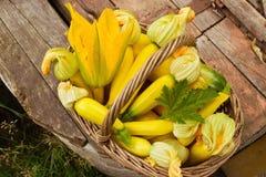 ώριμα λαχανικά Στοκ Εικόνες