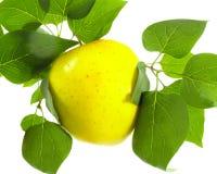 Ώριμα κίτρινα και πράσινα φύλλα της Apple Στοκ Εικόνα